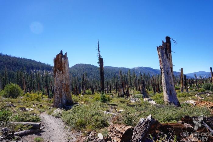 John-Muir-Trail-Reds-meadow