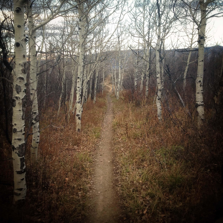 Singletrack on the Rim Trail in Aspen, Colorado