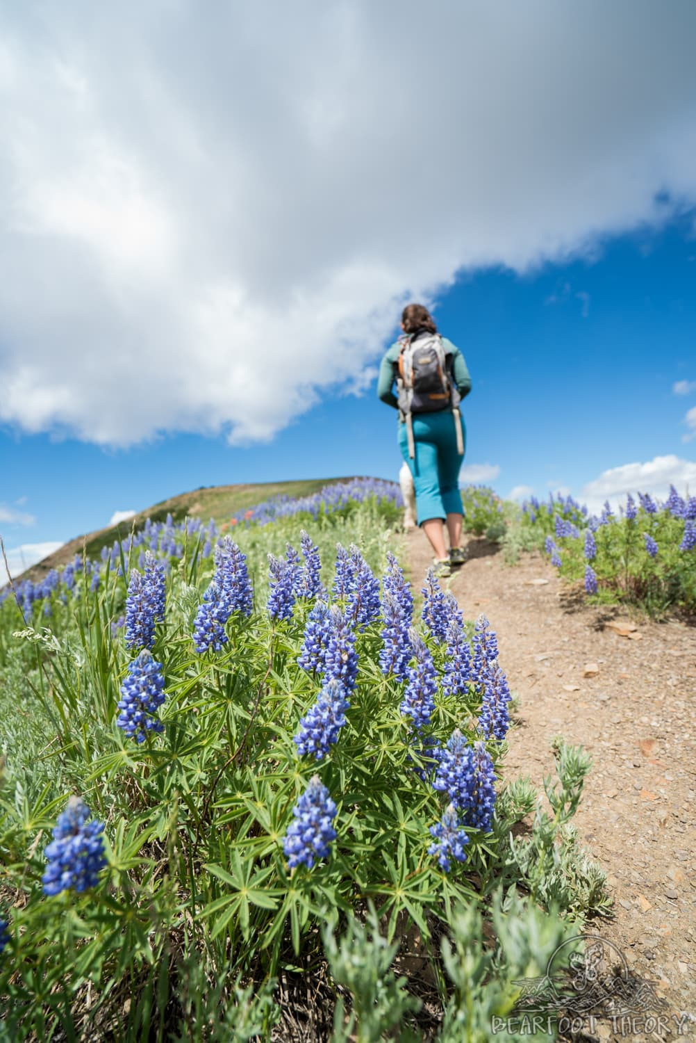 Hiking 101: Hiking Tips for Beginners
