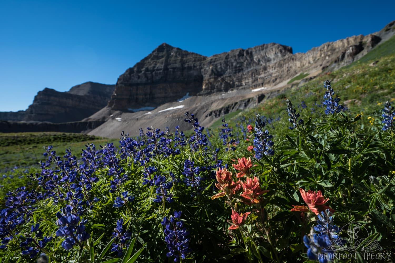 Wildflowers below Mount Timpanogos
