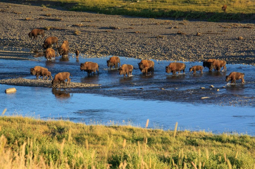 Lamar Valley / Home to the largest concentration of bison in Yellowstone National Park