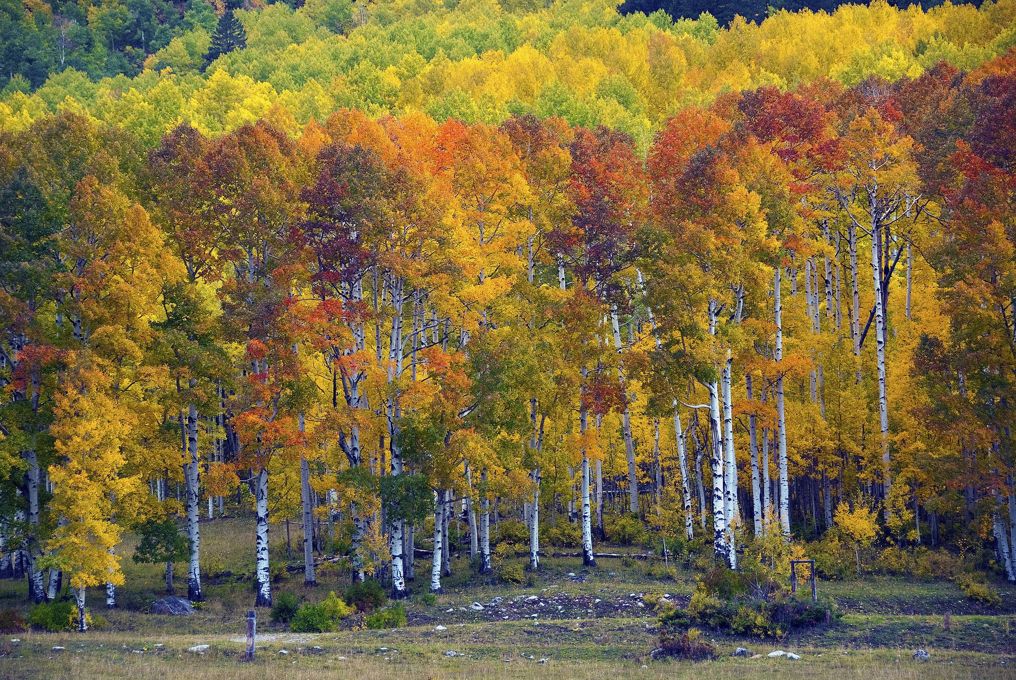 Fall colors in Durango // Experience vibrant fall Colorado foliage with this road trip itinerary that takes you through some of the best aspen groves in the state.