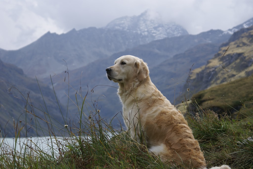 Important safety tips for hiking with dogs