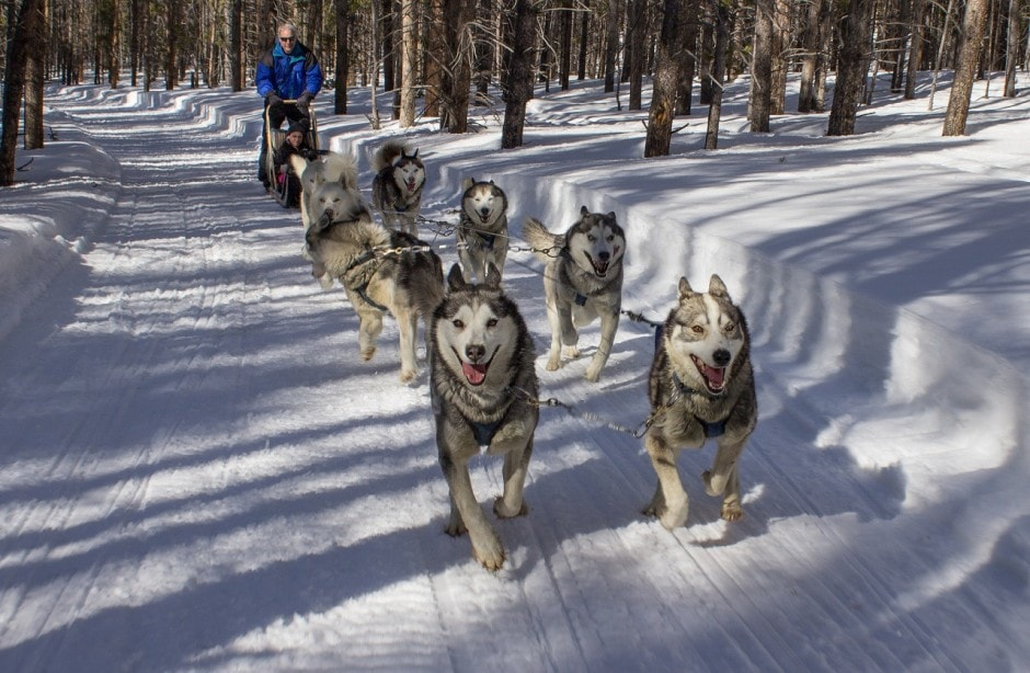 Things to do in Idaho during Winter: dog sledding