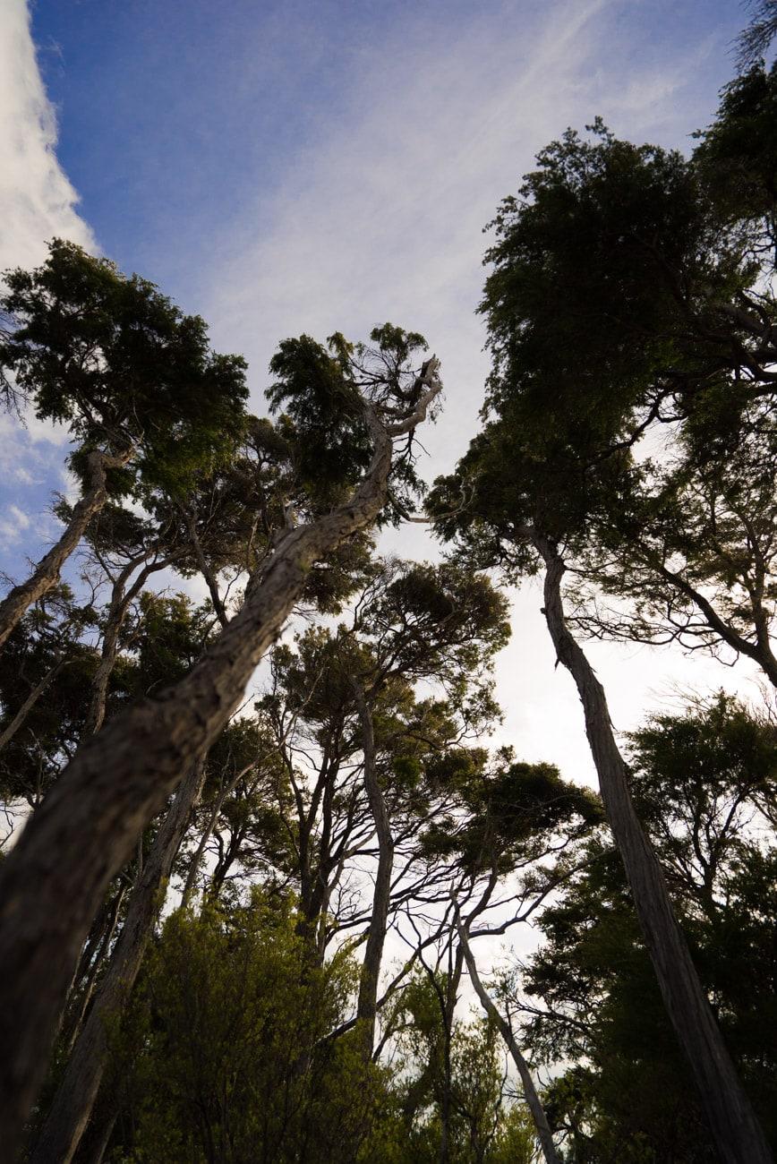 Hiking at Anchorage Bay in Abel Tasman National Park