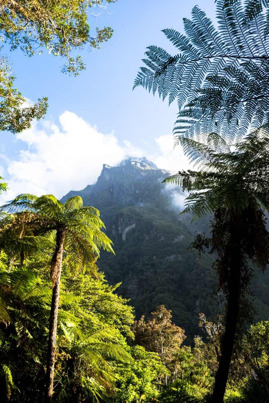Hiking the Copeland Track on New Zealand's West Coast