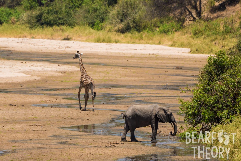 Safari in Tanzania's Tarangire National Park