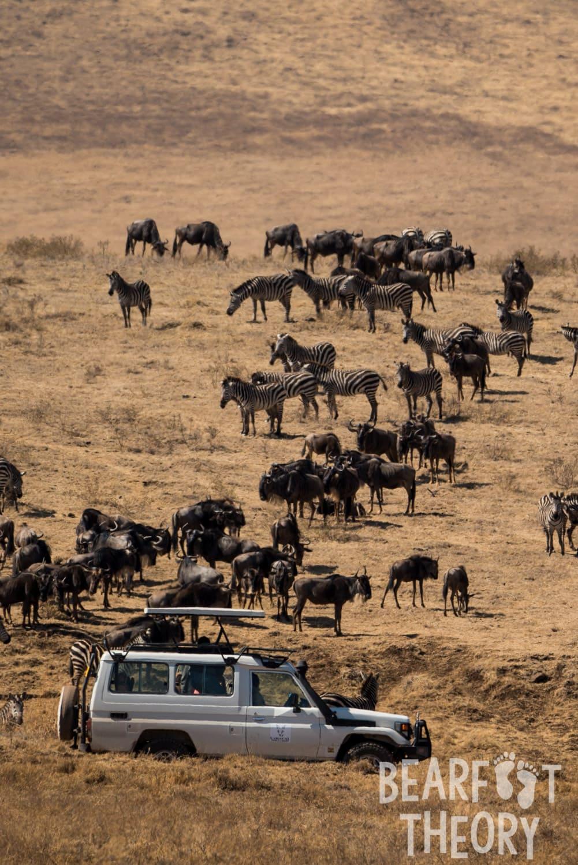Safari in Tanzania's Ngorongoro Crater Conservation Area