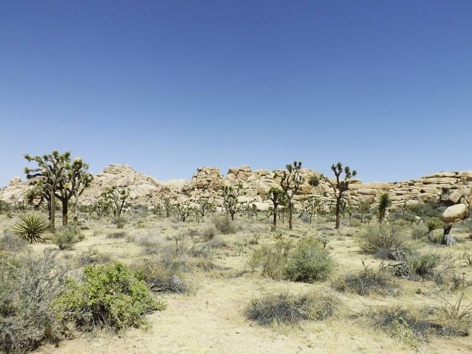 Prepare for your southwest adventure with these desert backpacking tips! Learn where to go, what gear you need, and advice for having fun & being safe // Joshua Tree National Park