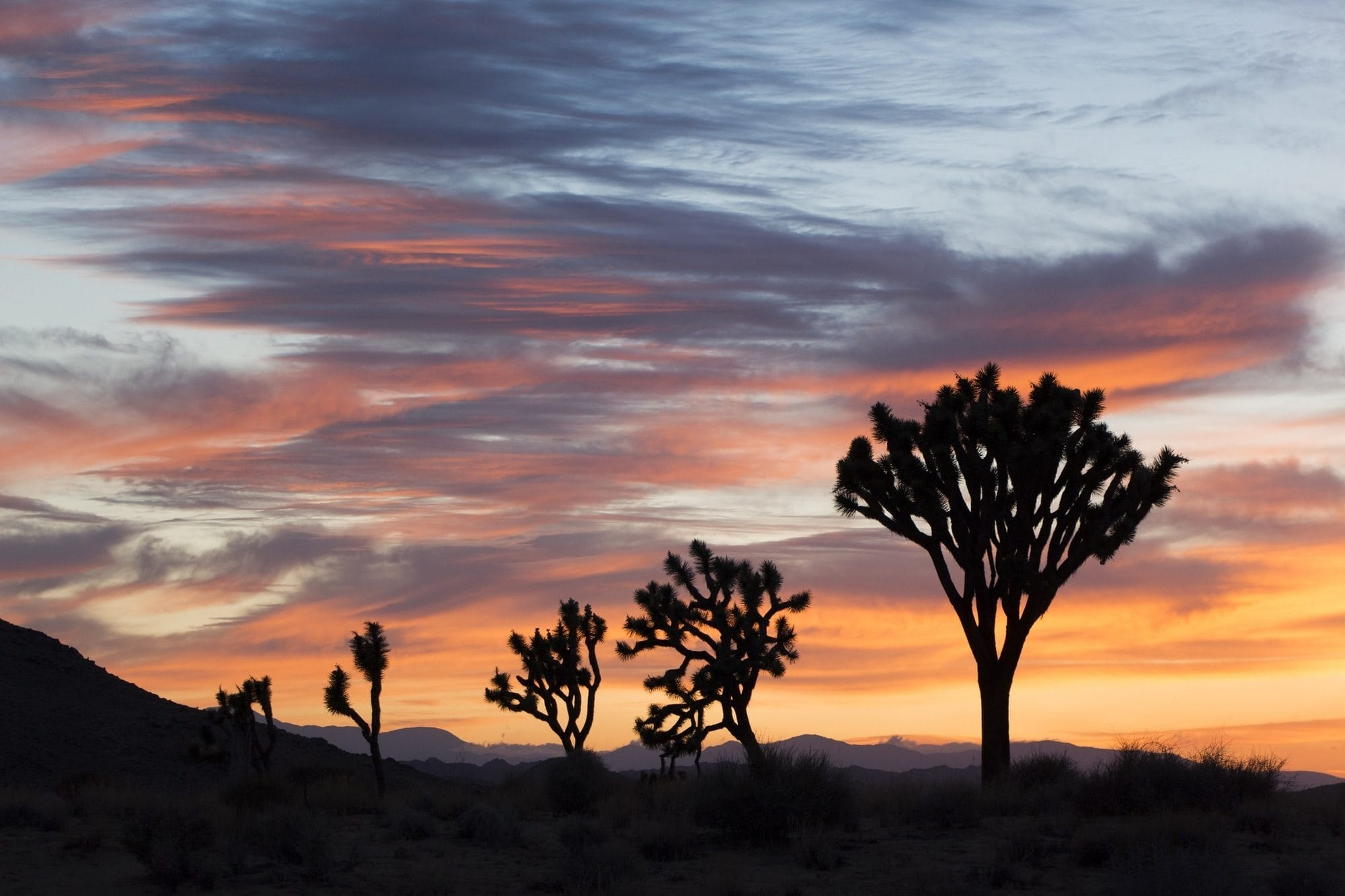 Plan a Joshua Tree backpacking trip w/ this detailed guide and itinerary to the 35 mile California Hiking & Riding Trail, w/ info on gear & water caches