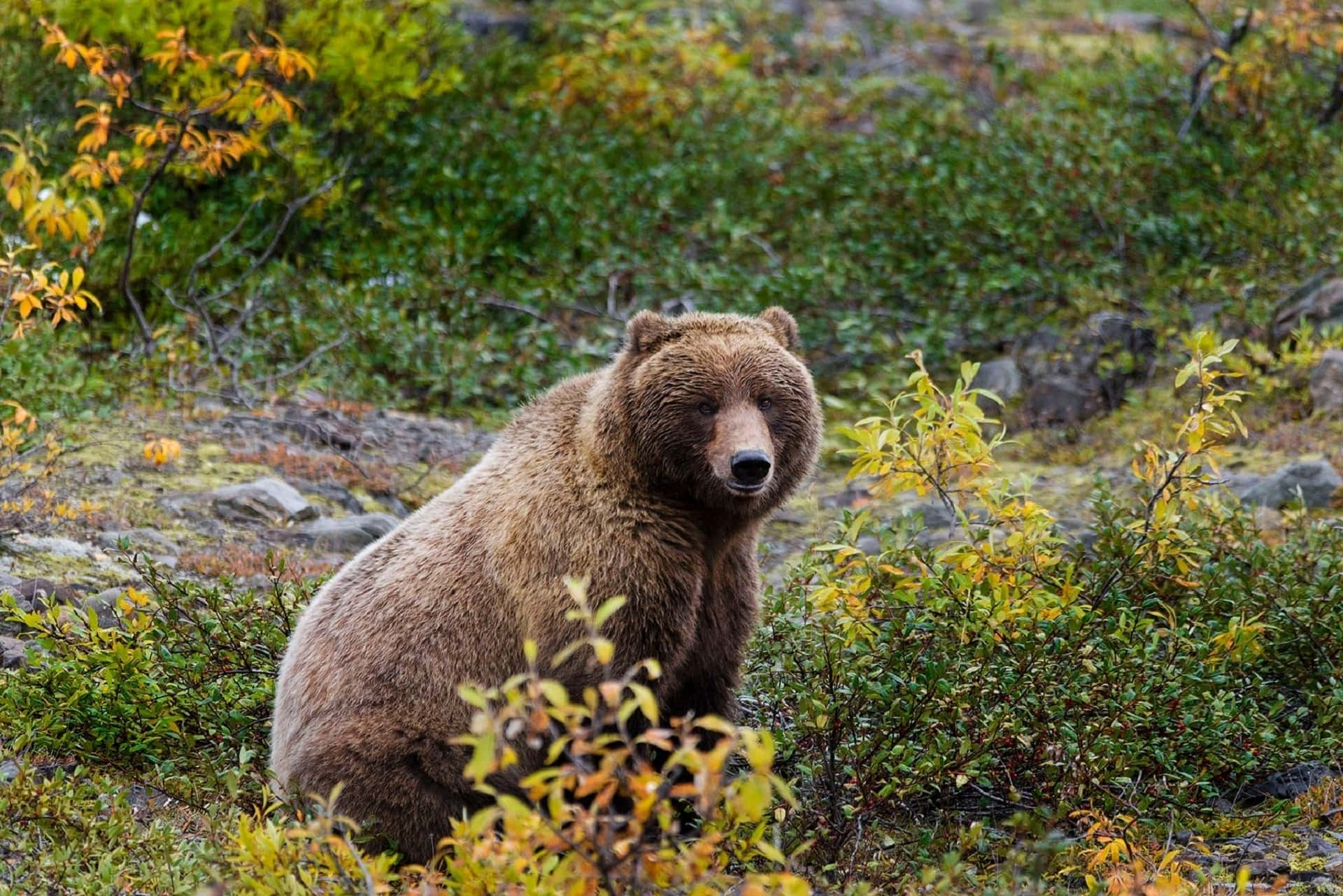 Prevent dangerous wildlife encounters with these wildlife safety tips including what to do if you see a bear, snake, mountain lion, or moose.