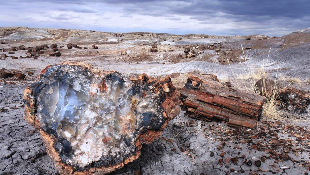 Petrified Forest National Park / One of the best Arizona road trip stops for outdoor adventure.