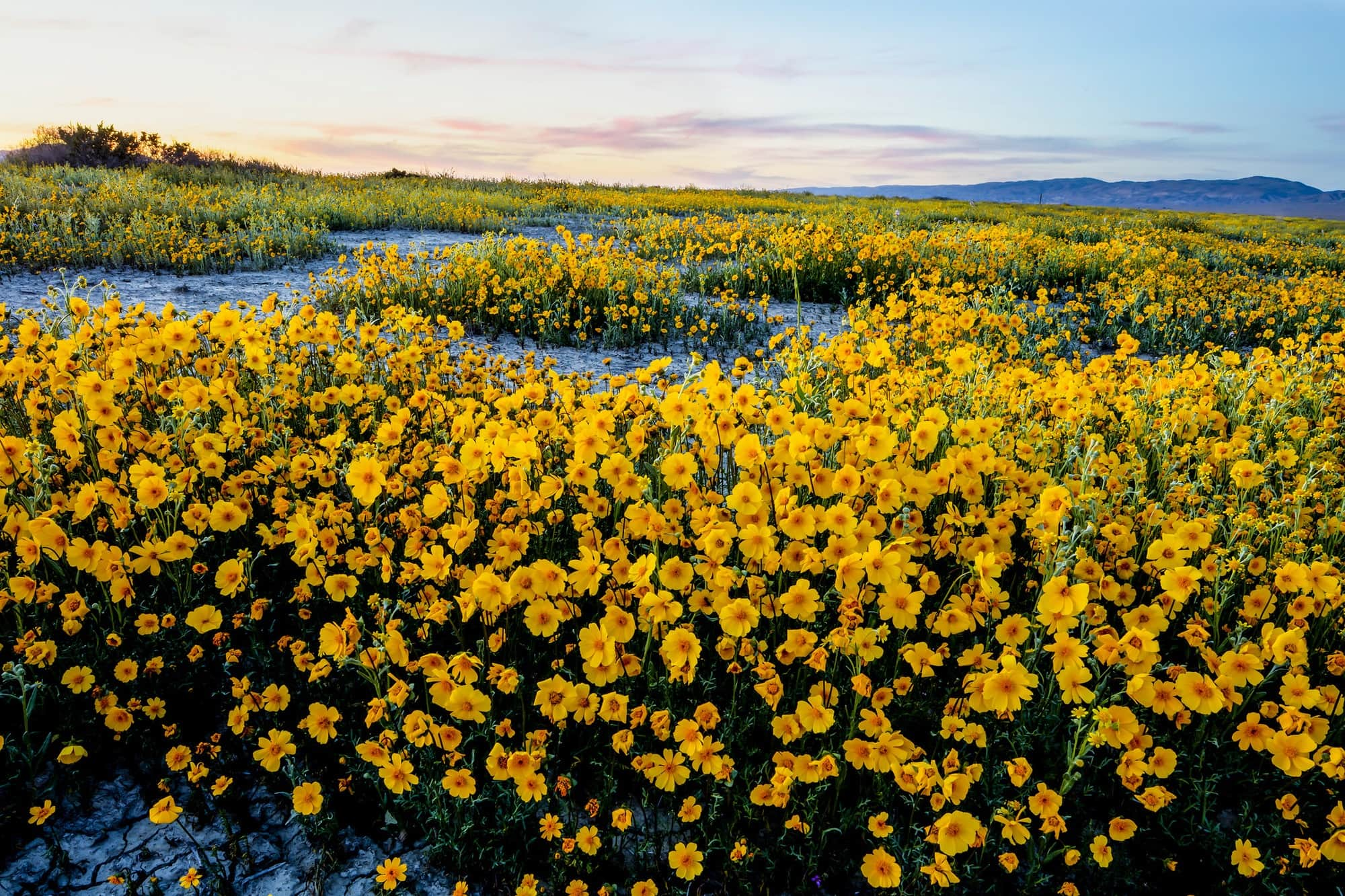 Carrizo Plain National Monument // Learn how national monuments are established, the details of President Trump's National Monument Review & how to submit comments so your voice is heard.