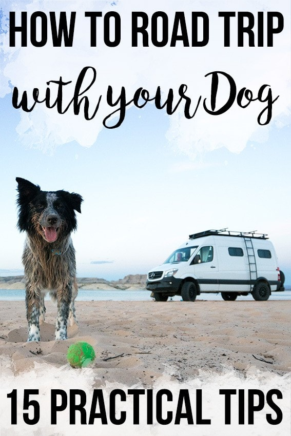 Get ready to hit the road with our 15 practical tips for how to road trip with your dog. Learn about training, keeping your dog comfortable & more.