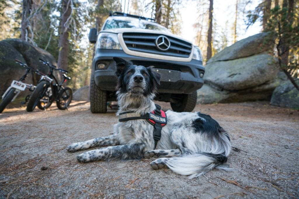 Charlie in Yosemite National Park // Get 15 practical tips for road trips with your dog, including training & ideas for keeping your dog exercised & entertained on the road.