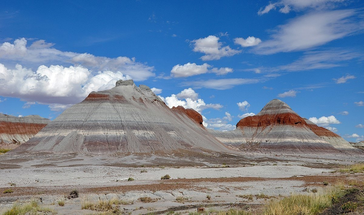 Petrified Forest National Park is one of the most dog-friendly national parks in the country.