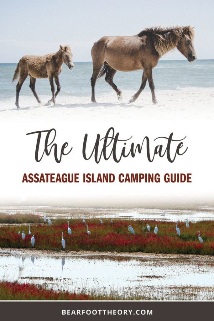 East Coast oceanfront camping, bike paths, wide open beaches, wild ponies and beautiful forests to explore are some of the highlights of Assateague Island. Our Assateague Island camping guide makes planning the perfect weekend getaway a cinch.