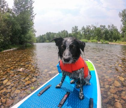 An expert guide on how to keep dogs cool in the summer heat; including do's & don'ts, products for staying cool, and warning signs to watch for.