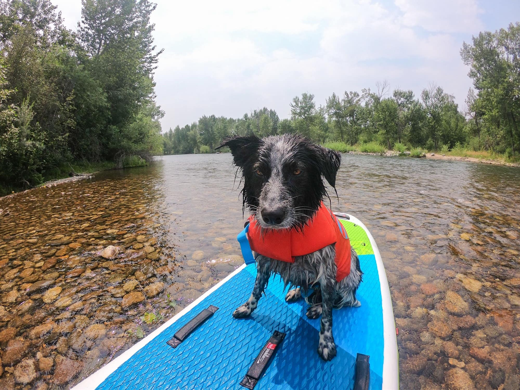 How to Keep Your Adventure Dog Cool in the Summer Heat