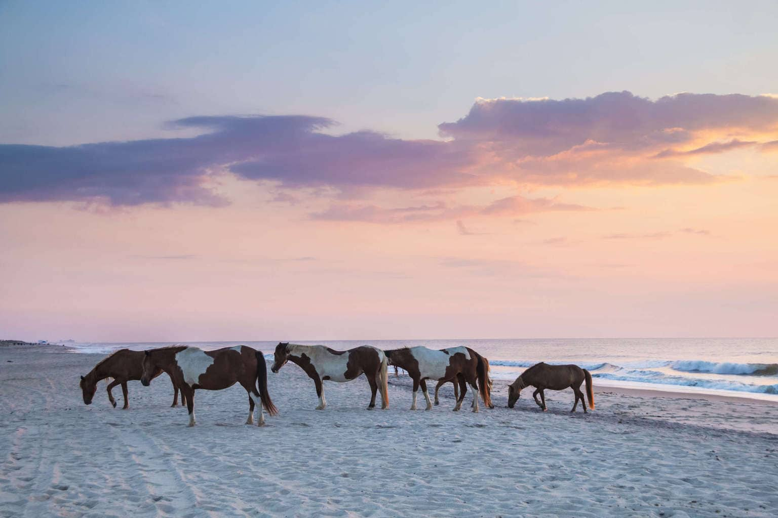 The Ultimate Guide To Assateague Island Camping