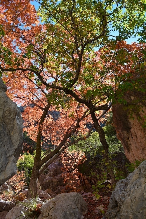 Guadalupe National Park // Discover the best National Parks to visit in fall for the best leaf-peeping vacation. Get tips on best hikes, scenic drives, and more.