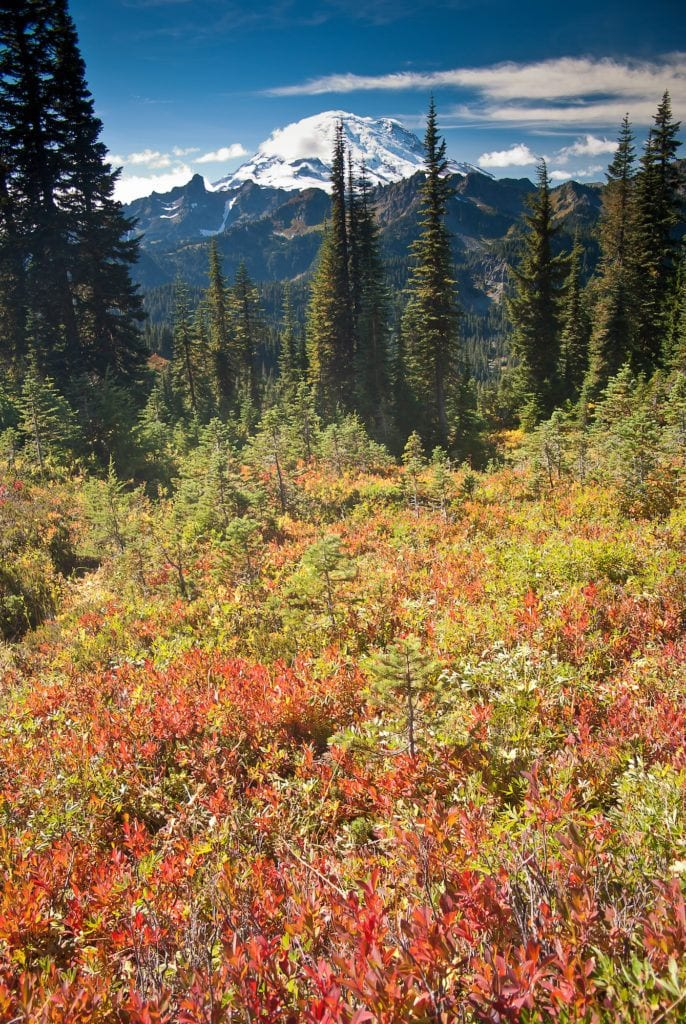 Mount Rainier // Discover the best National Parks to visit in fall for the best leaf-peeping vacation. Get tips on best hikes, scenic drives, and more.
