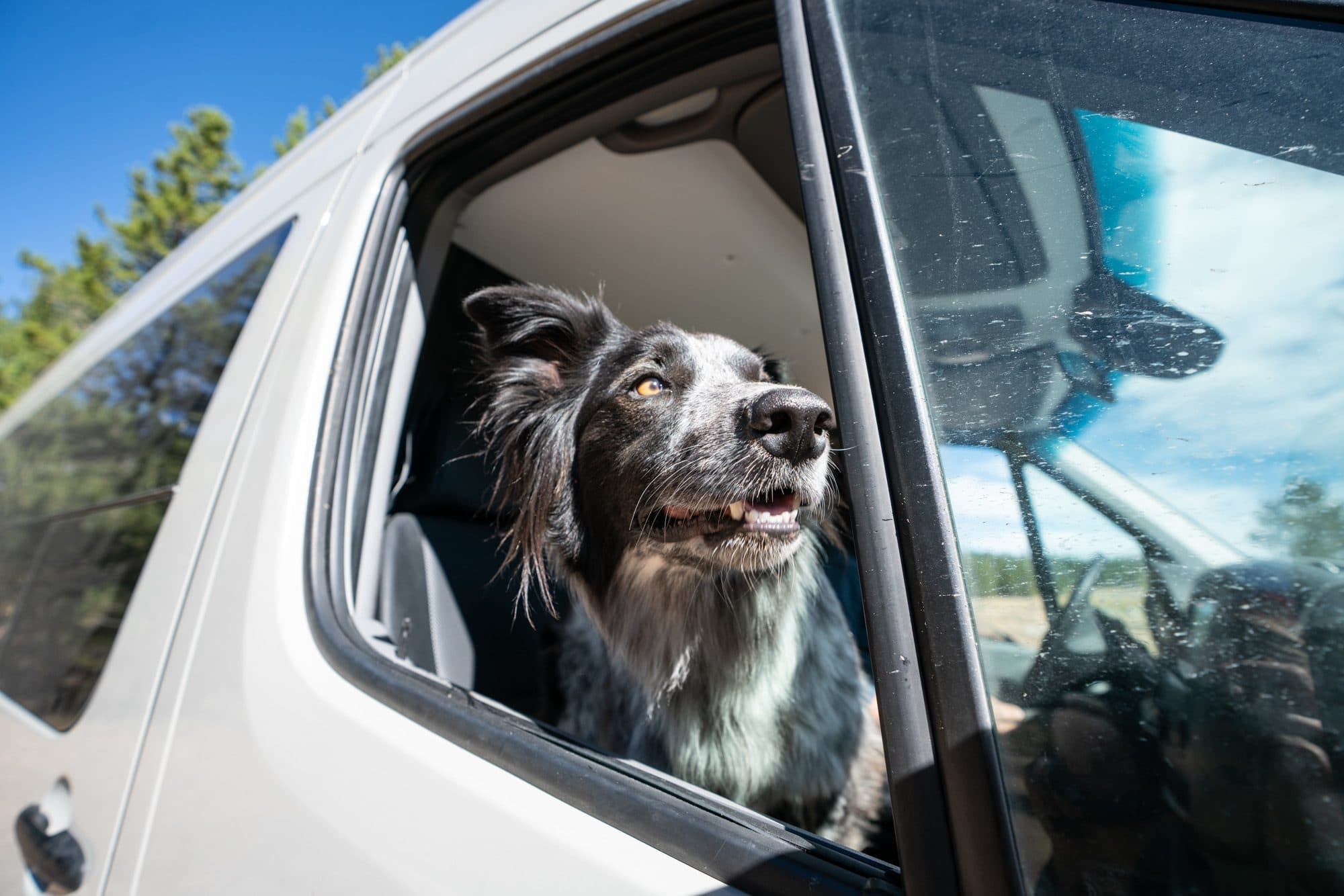 Tips for Van Life with a Dog: Advice from 50,000 Miles on the Road