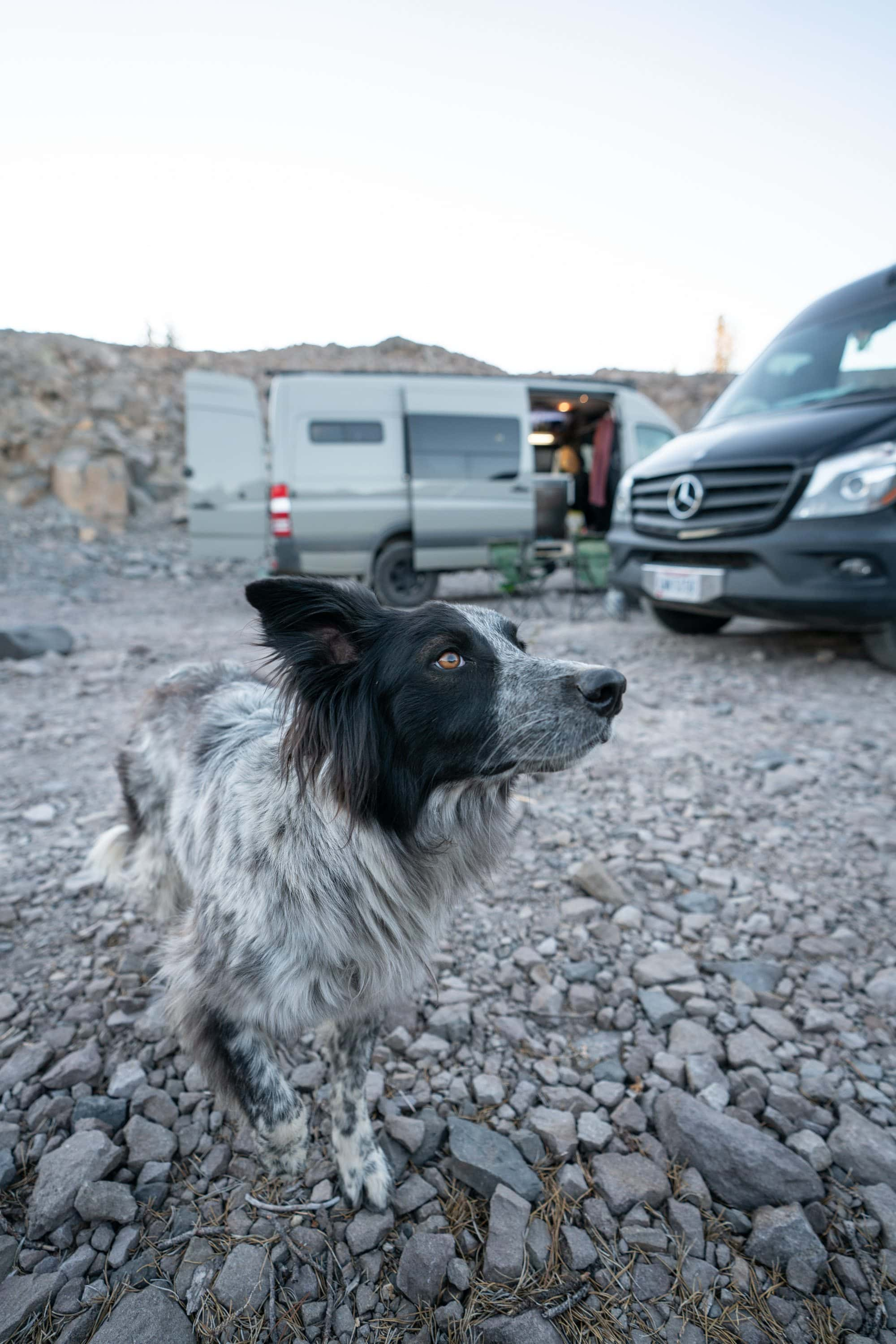 Wondering what van life with a dog is like? Here is my best advice for taking care of your pup & finding dog-friendly activities while living on the road.