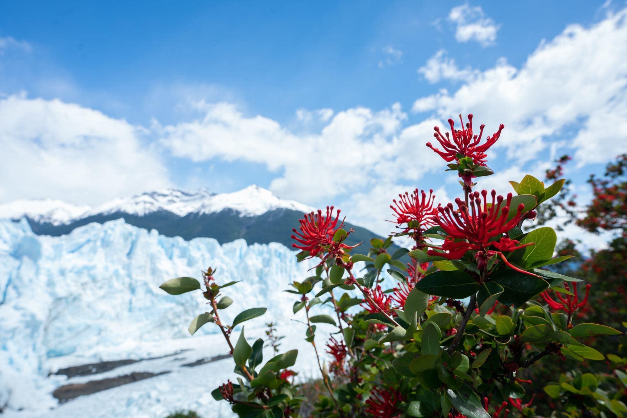 Exploring the Perito Moreno Glacier in Spring on a G Adventures tour