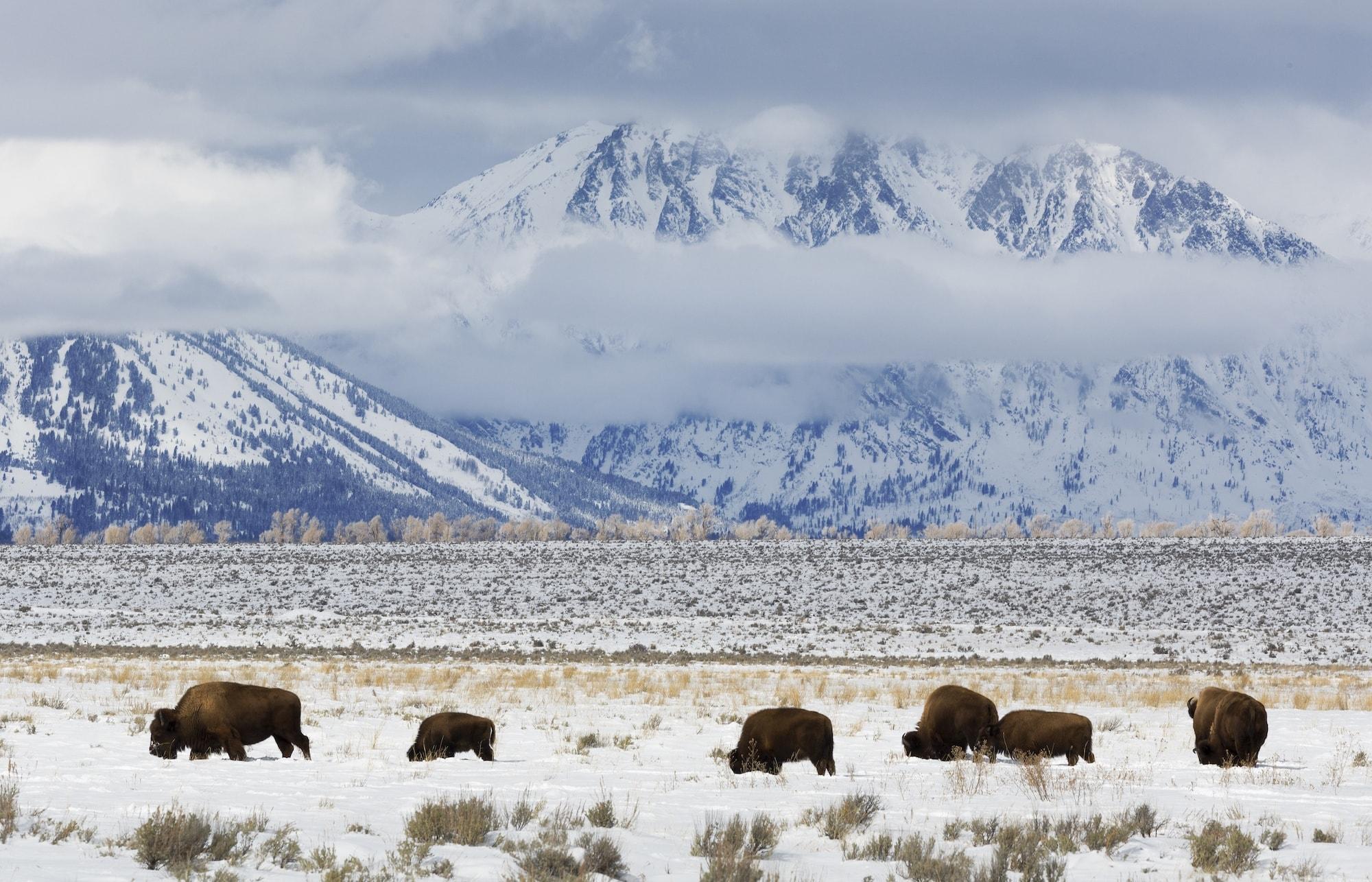 Teton National Park in Winter