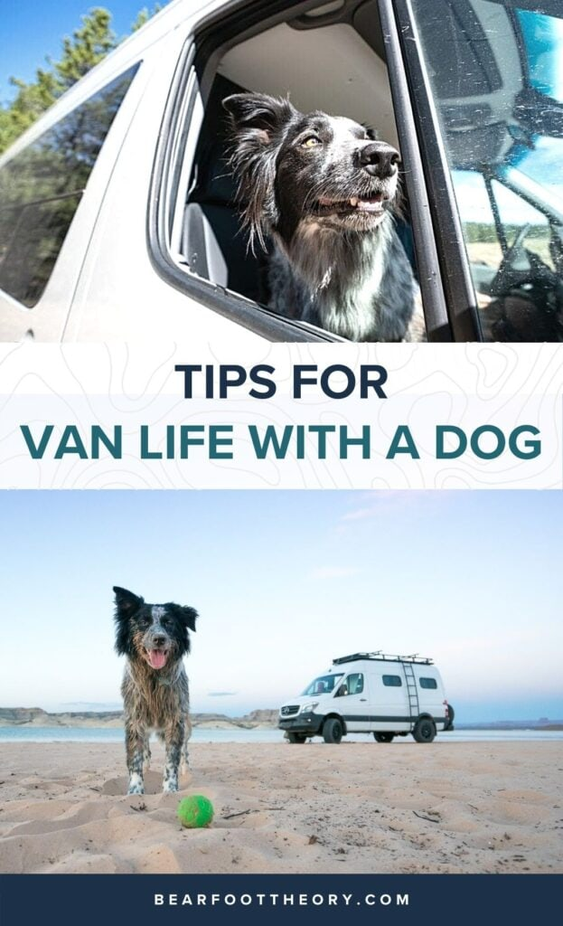 Wondering what van life with a dog is like? Here are tips for living in a van with pets and finding dog-friendly activities while traveling.