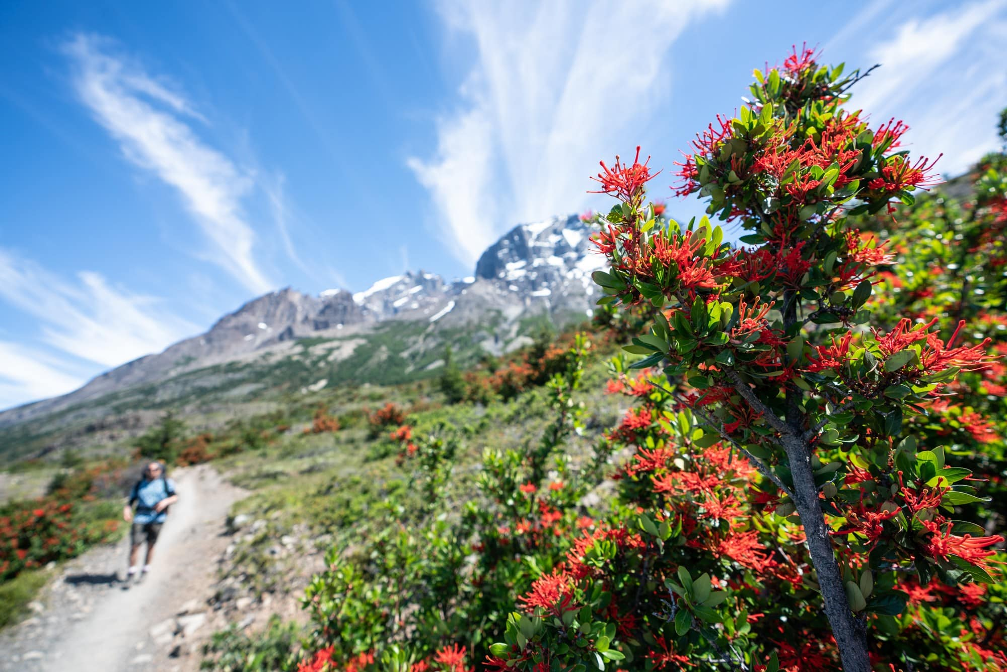 When is the best time to hike the W Trek in Patagonia? Visit my blog post to find out!