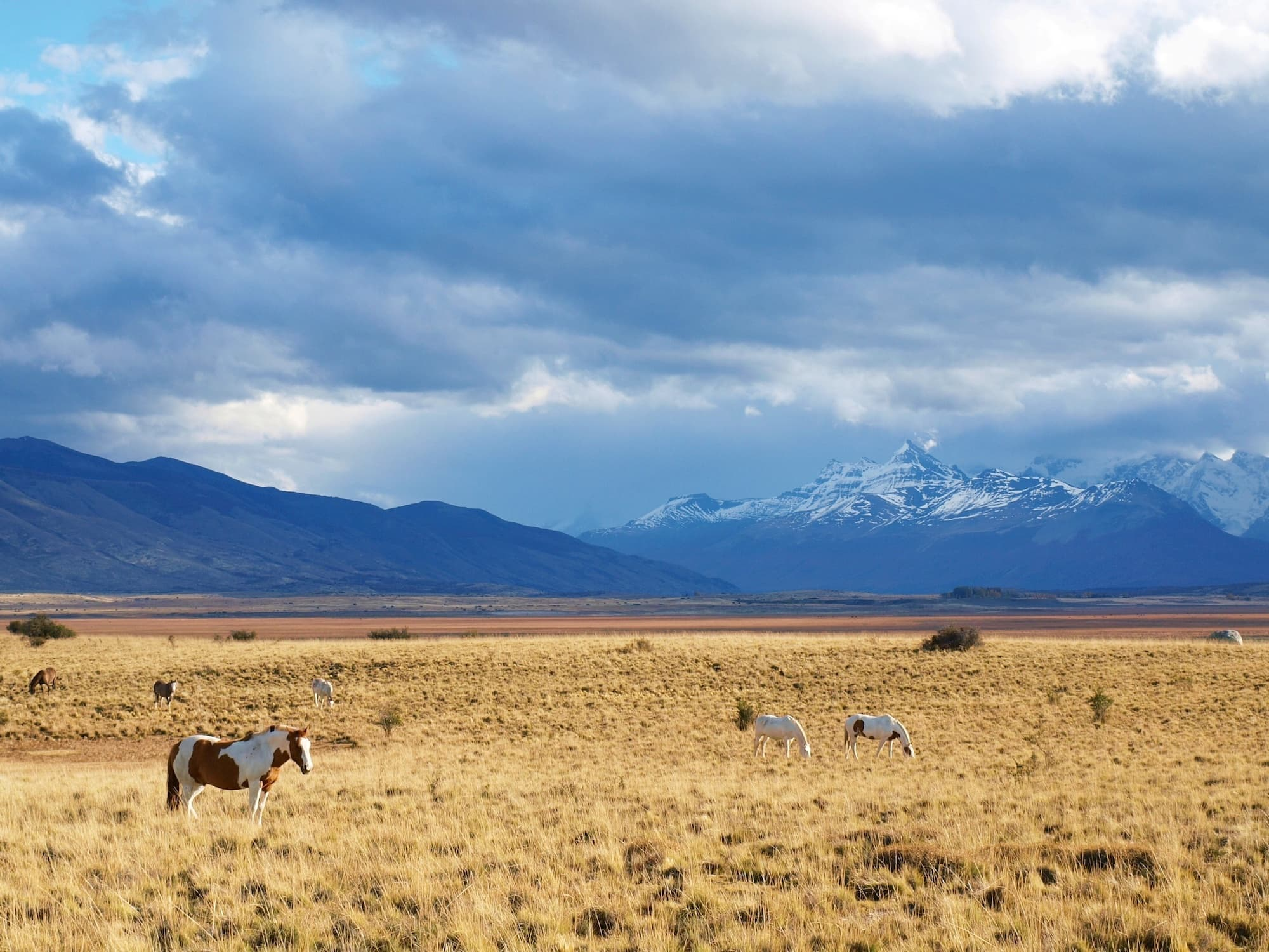 10 Things to Do in El Calafate, Argentina