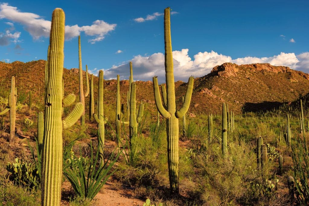 Saguaro National Park / One of the best Arizona road trip stops for outdoor adventure.