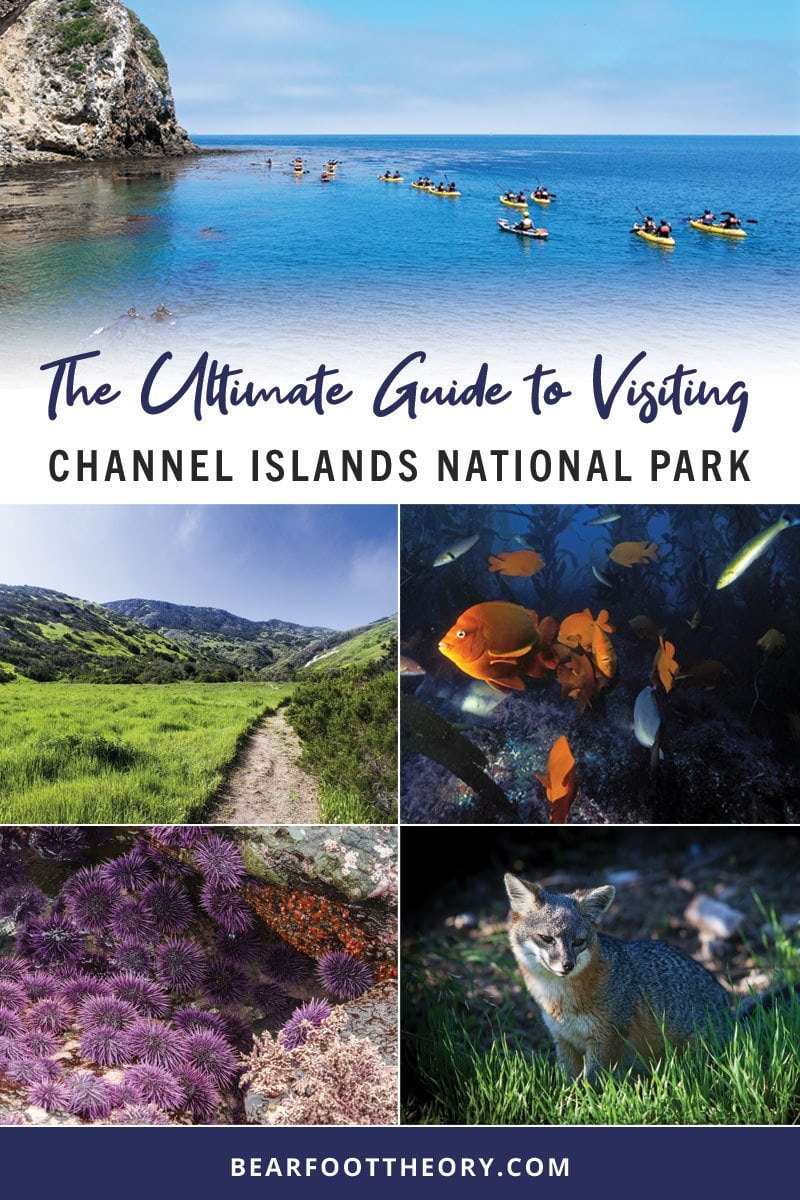 Get the scoop on camping, hiking, marine life & outdoor adventure in this outdoor enthusiasts guide to the five islands of Channel Islands National Park.