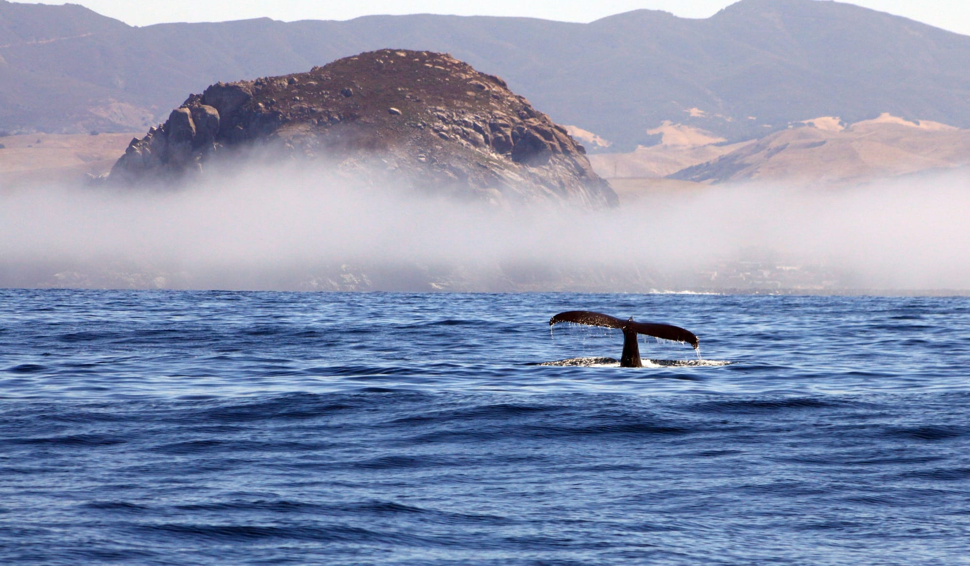 Morro Bay Whale Watching // Plan a 6-day California coast road trip from Ventura to Cambria with this itinerary packed with outdoor adventure, amazing food, and unique places to stay.