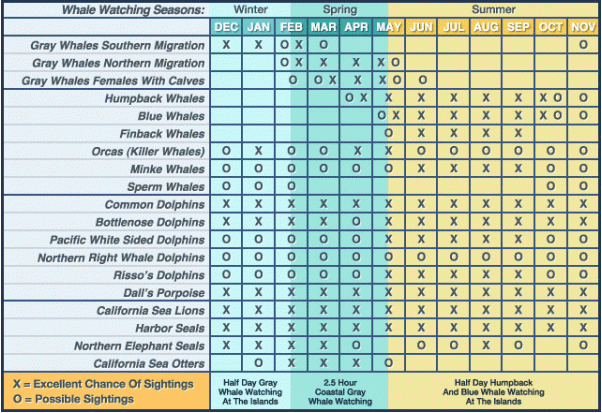 Wildlife sightings by month near Channel Islands National park