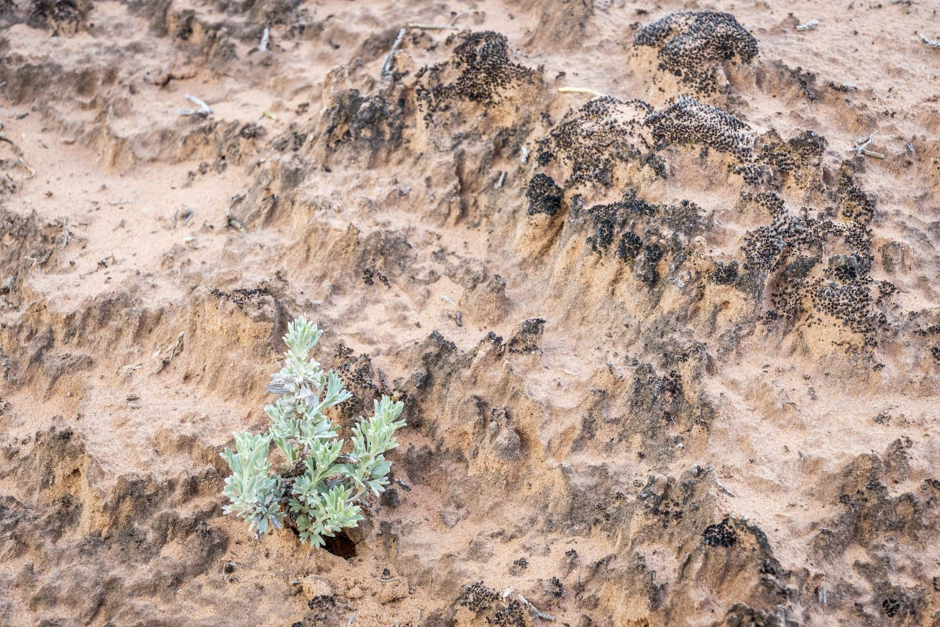 Leave No Trace in the desert - don't step on cryptobiotic soil.