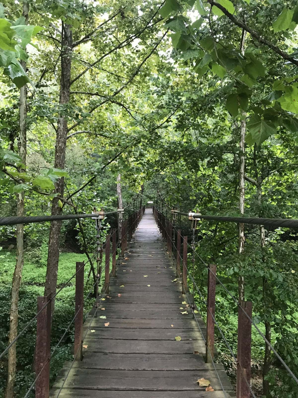 Avalon Loop Trail // Looking for the best hikes in Maryland? Here are our 7 favorite Maryland trails including distances, descriptions, and local tips.