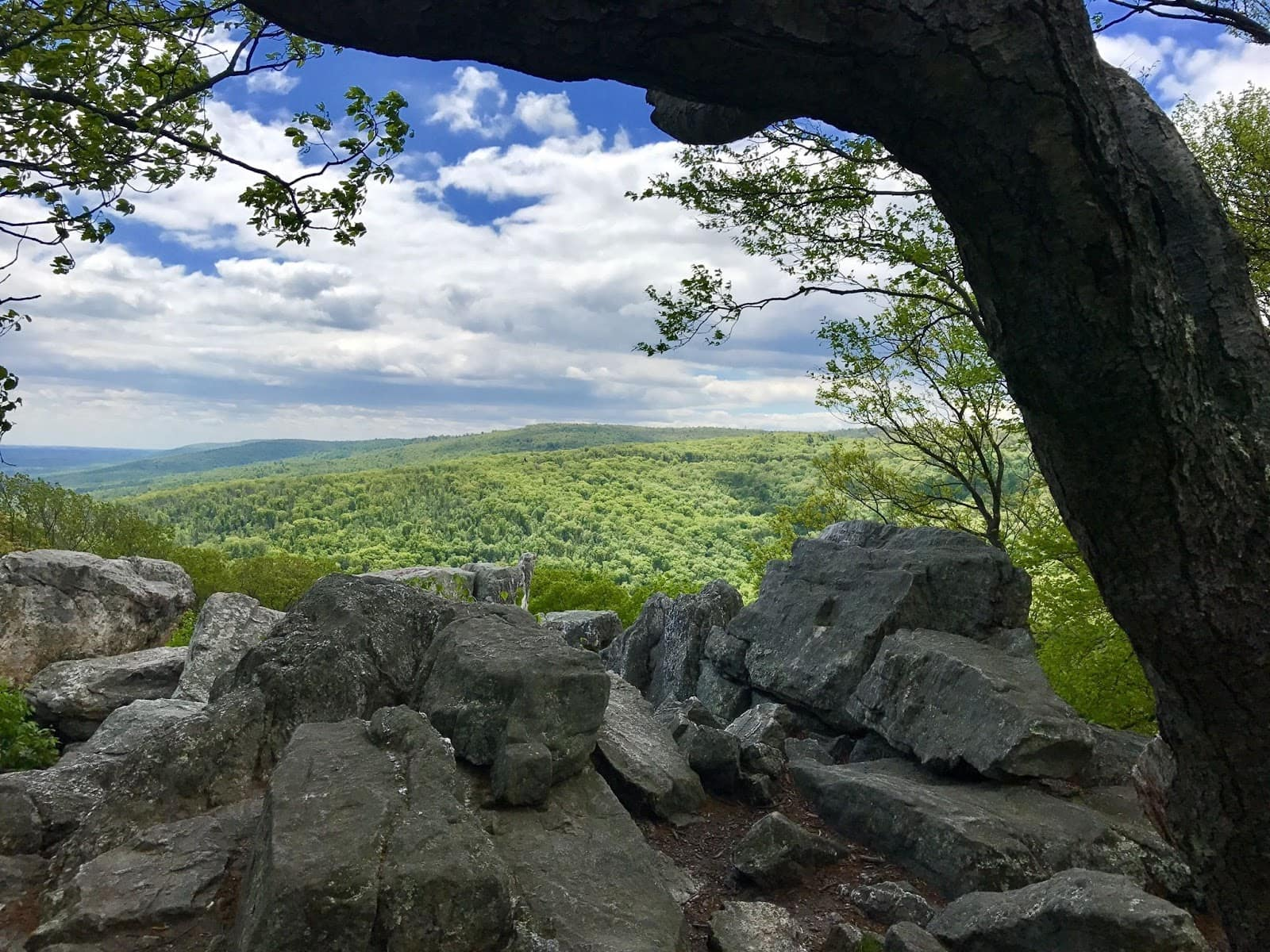 Catoctin Mountain // Looking for the best hikes in Maryland? Here are our 7 favorite Maryland trails including distances, descriptions, and local tips.