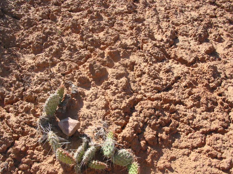 Cryptobiotic Soil Crust in Canyonlands Nat'l Park Utah // What is cryptobiotic soil and why is it so important? Learn everything you need to know to protect this biological soil crust in the desert.