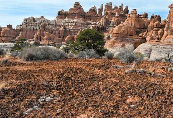 Cryptobiotic Soil Canyonlands Nat'l Park // What is cryptobiotic soil and why is it so important? Learn everything you need to know to protect this biological soil crust in the desert.