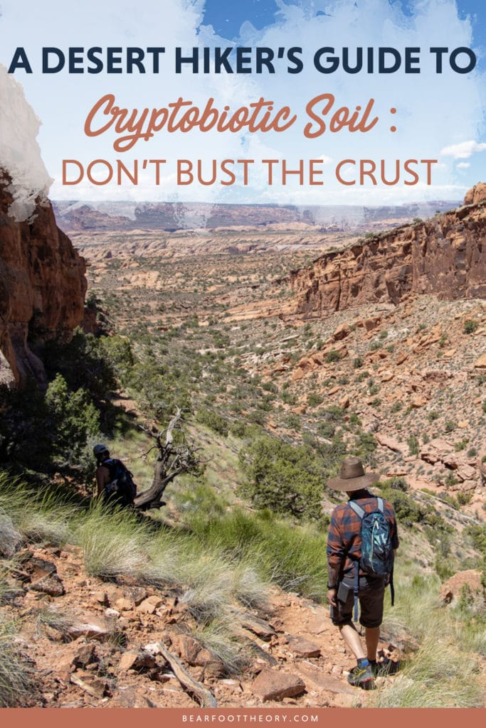 What is cryptobiotic soil and why is it so important? Learn everything you need to know to protect this biological soil crust in the desert.