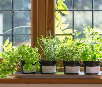 Are you looking for ways to get a nature fix indoors? Check out this comprehensive list of how to bring the great outdoors into the comforts of home.