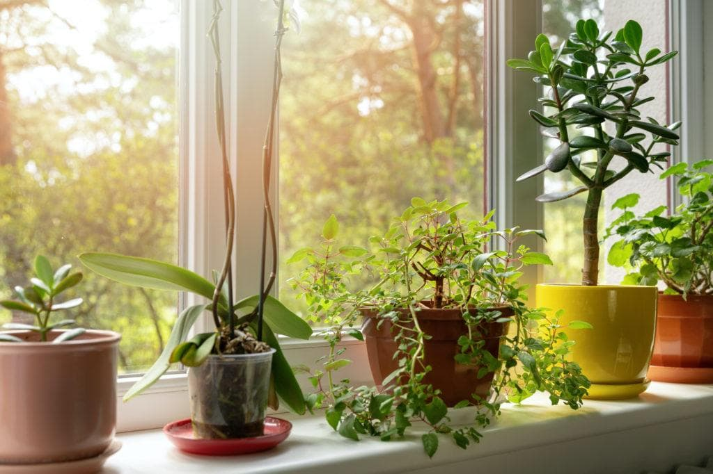 Putting plants in your house is a great way to connect with nature and bring the outdoors inside