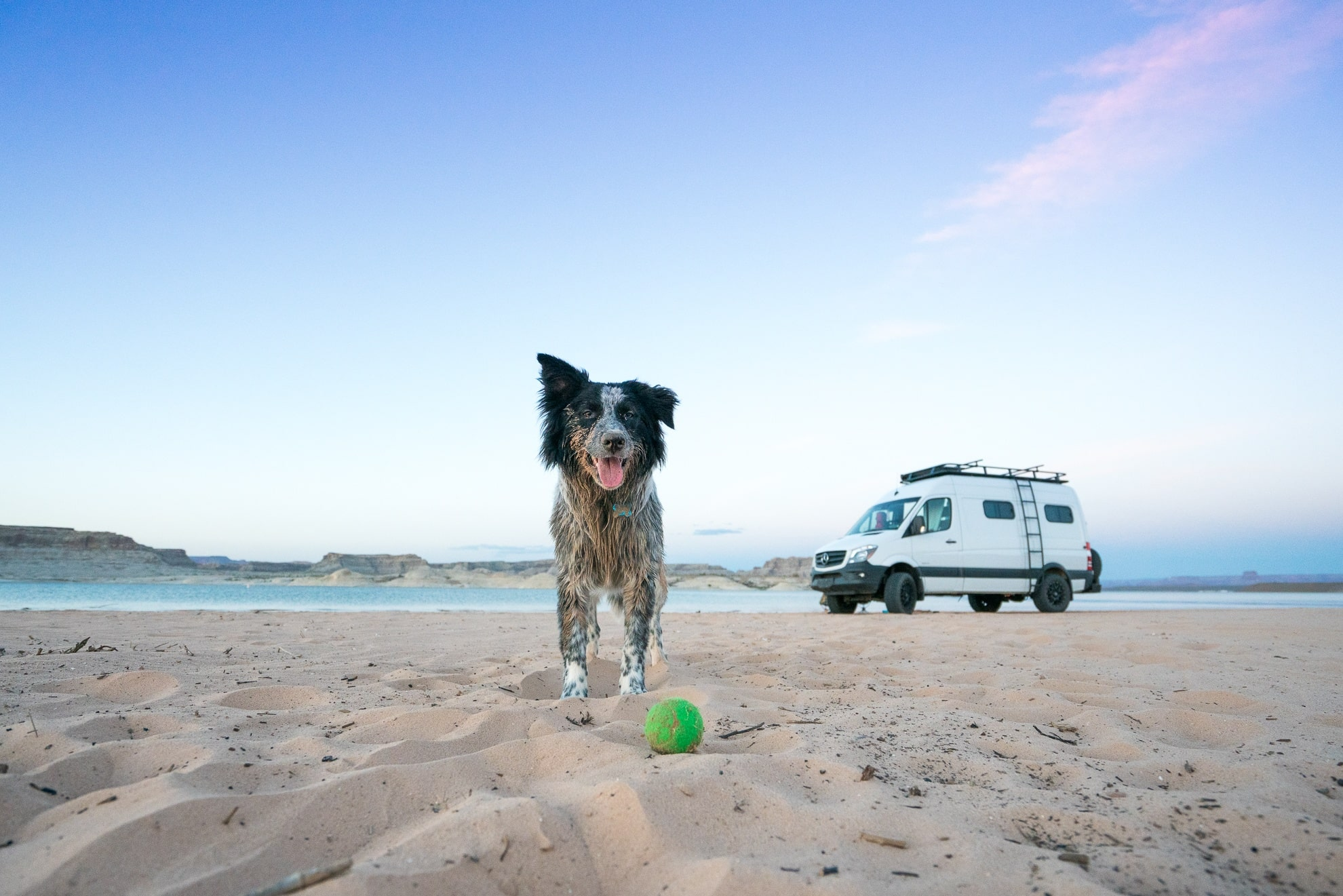 Van Life with a Dog: Tips for Living & Traveling with Pets