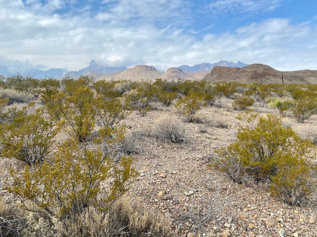 Big Bend National Park, Texas //  This travel guide includes the top things to do in Big Bend National Park including hiking, hot springs, river trips, and camping.