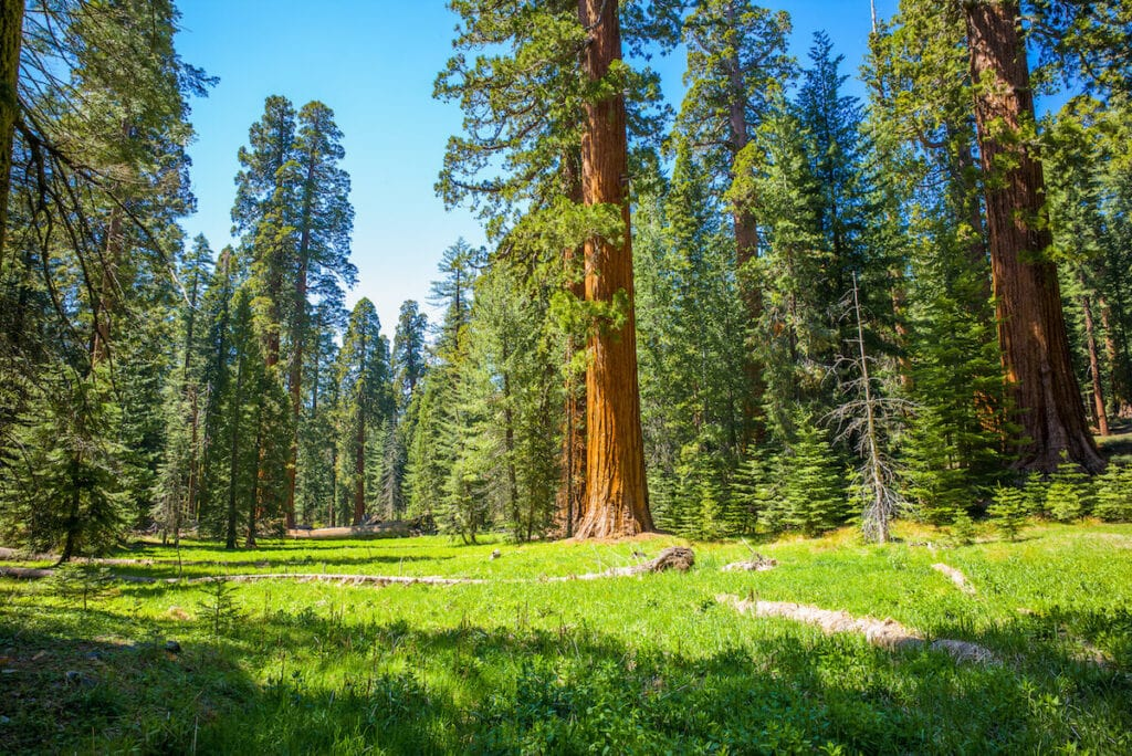 Mariposa Grove // Looking for the best hikes in Yosemite National Park? We've got you covered with detailed trail guides for the park, including a map.