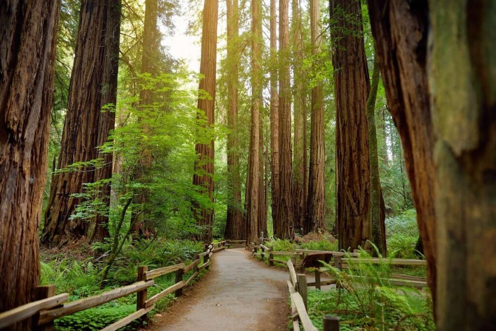 Redwoods // The best California road trips stops for outdoor adventure including California's National Parks, monuments, coastal towns, and more.