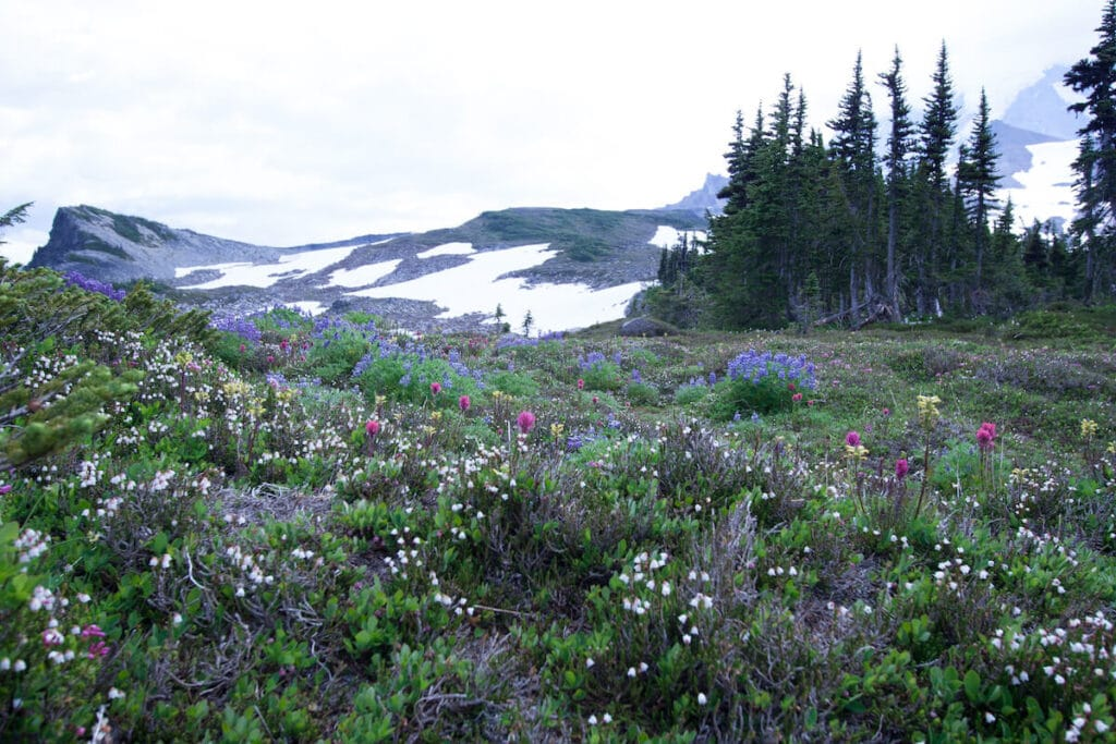 Spray Park trail // Plan your trip to Mt. Rainier National Park with our guide to the best Mt. Rainier hikes for epic views during the summer.